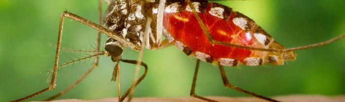 malaria myths and facts