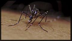 mosquito_malaria
