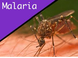 malaria information for travelers