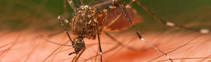 mosquito myths and facts