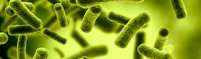 How to Kill E. Coli in Your Body
